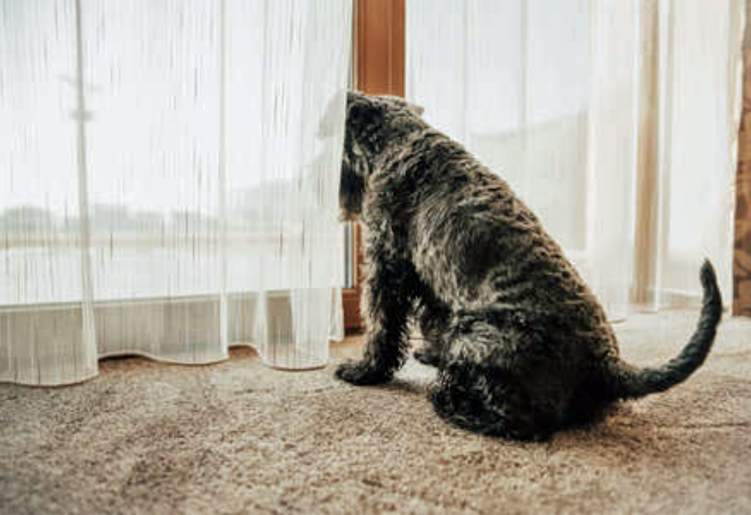 confinement avec son chien