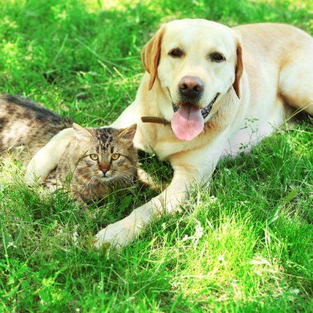 Chien et Chat une vie harmonieuse