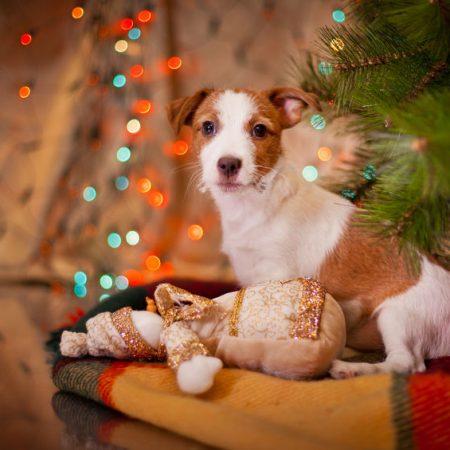 offrir un chien à Noël