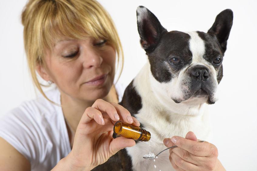 médicament pour chien