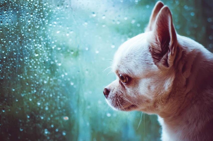 offrir un chien peut rendre triste