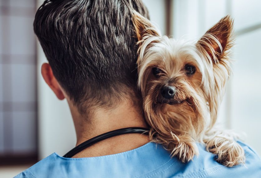 Choisir le bon vétérinaire
