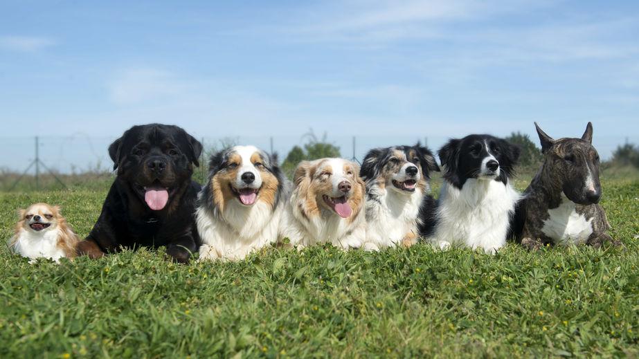l'éducation canine en groupe