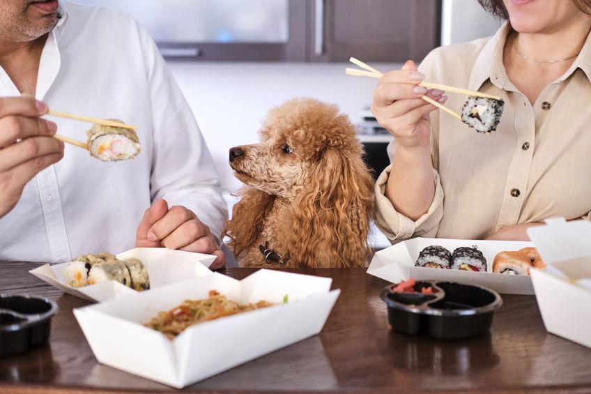 chien qui réclame pendant le repas