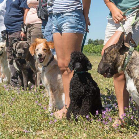 éducation canine en groupe