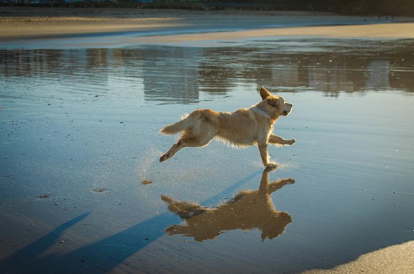 liberté du chien en balade