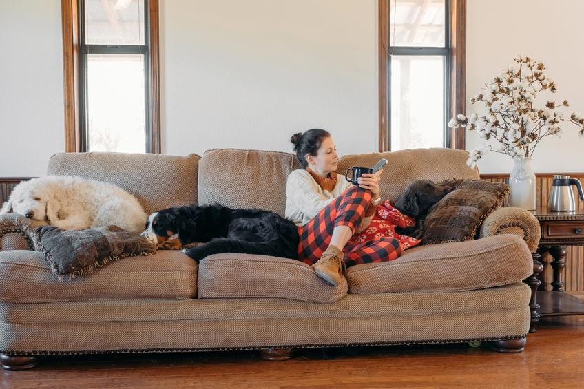 chiens sur la canapé
