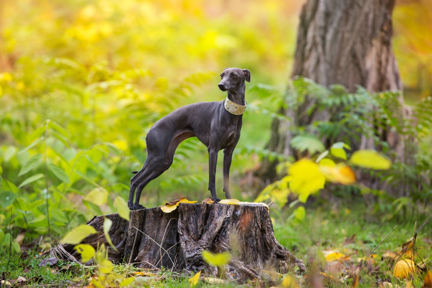 chien Wouf Wouf en forêt