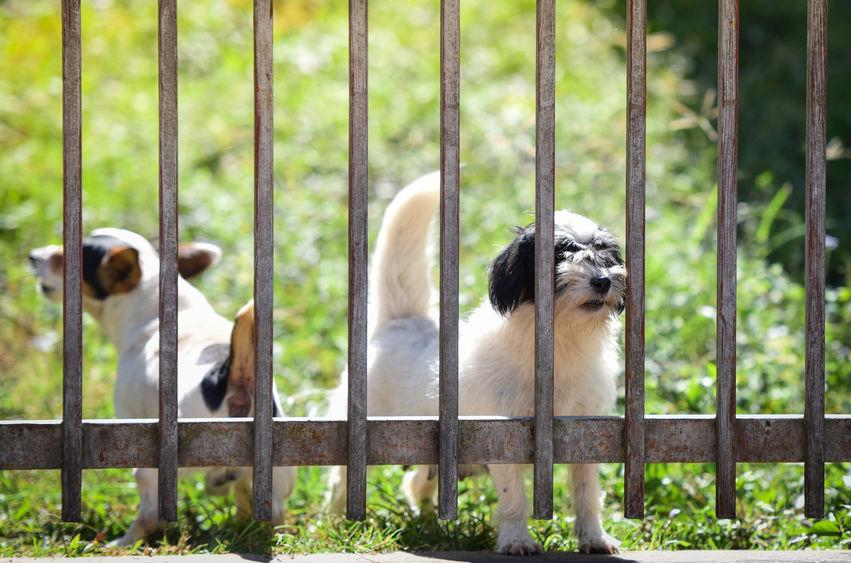 2 chiens derrière un portail