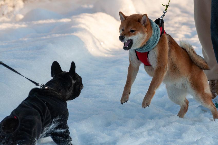 deux chiens aboient