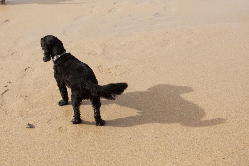 Chien Wouf Wouf à la plage