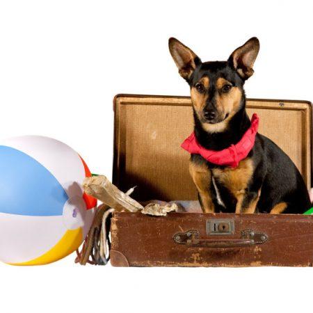 préparer les vacances avec son chien