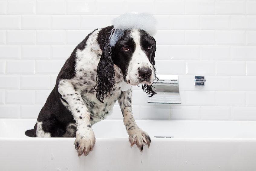 chien dans le bain
