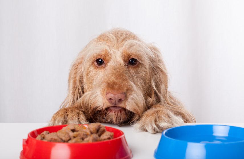 une alimentation du chien variée