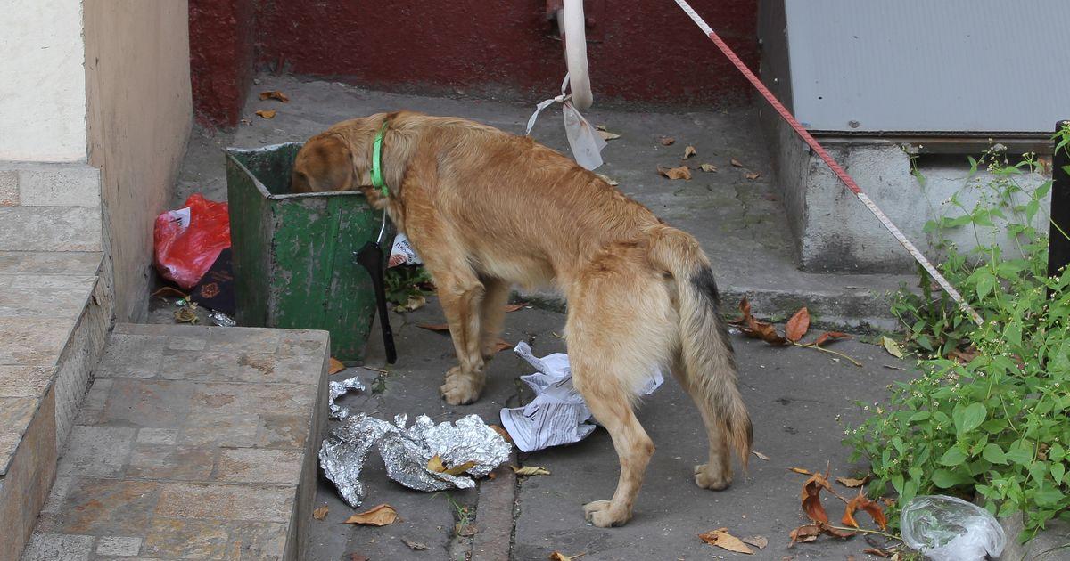 chien mange les poubelles
