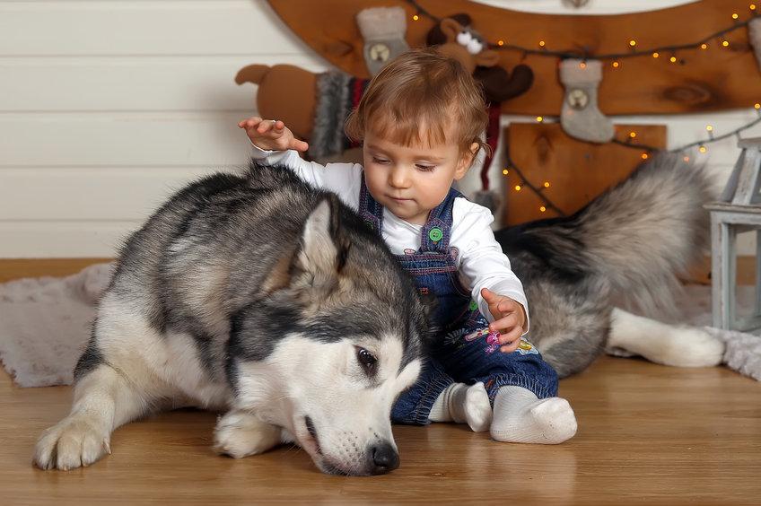 cohabitation chien et bébé