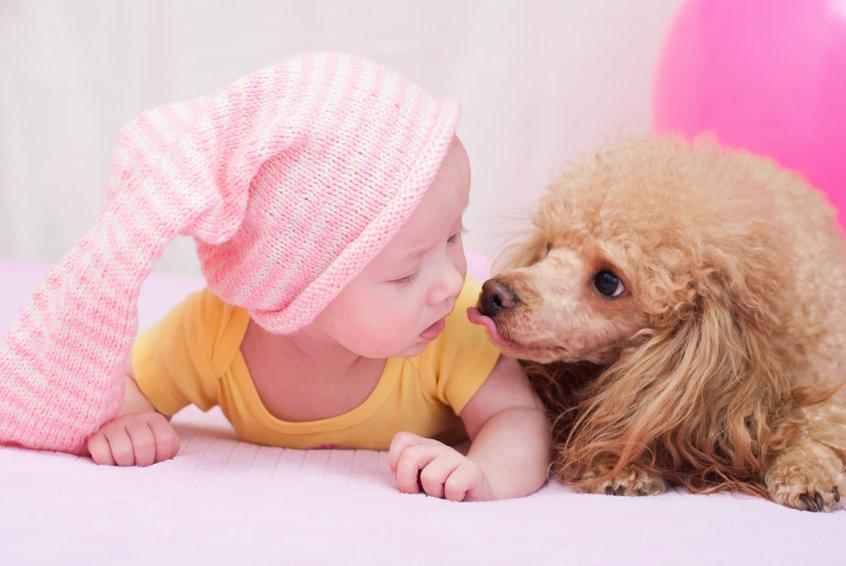 bébé et chien